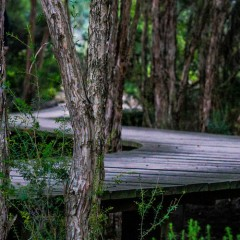 Top 3 Free Things to do on the Gold Coast