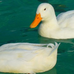 Top 3 Gold Coast Duck Parks