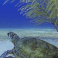best-scuba-dive-centre-gold-coast