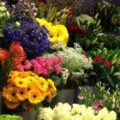 Best-Florist-Gold-Coast