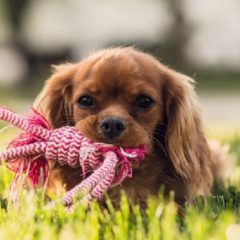 Top 3 Pet Shops on the Gold Coast